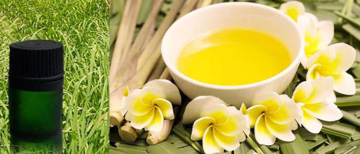 aceite esencial de citronela puro