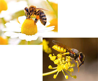 Avispa y abeja alimentándose