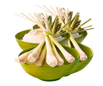 Usos de los tallos de citronela y de sus hojas