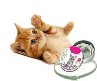 Collar antipulgas para gatos hecho con citronela