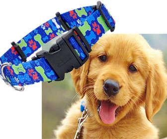 Collar para prevenir la Leishmaniosis en perros